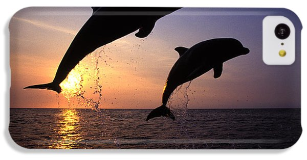 Bottlenose Dolphins IPhone 5c Case by Francois Gohier and Photo Researchers