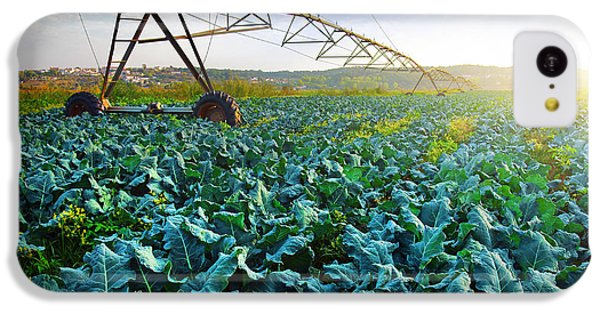 Cabbage Growth IPhone 5c Case by Carlos Caetano