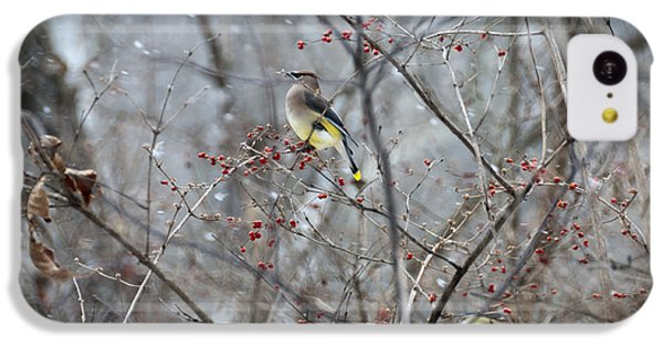 Cedar Wax Wing 3 IPhone 5c Case by David Arment