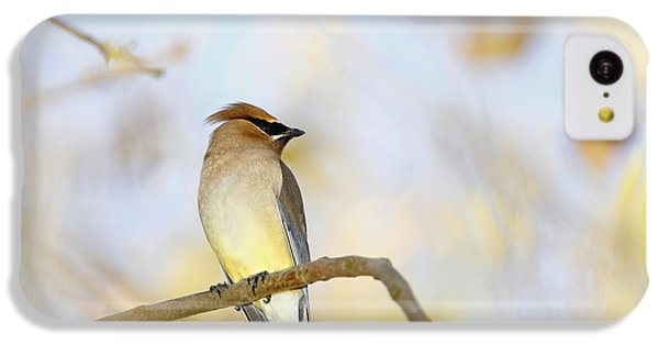 Cedar Waxwing On Yellow And Blue IPhone 5c Case by Susan Gary
