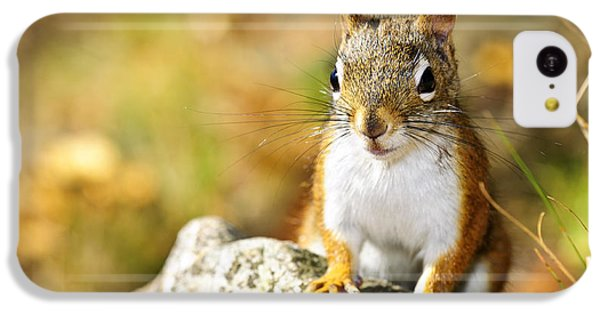 Cute Red Squirrel Closeup IPhone 5c Case by Elena Elisseeva