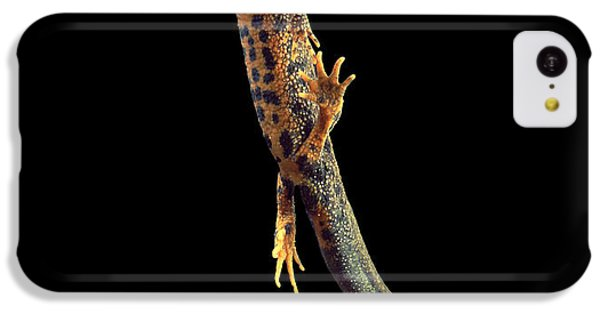 Great Crested Newt IPhone 5c Case by Andy Harmer