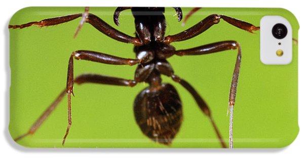 Japanese Slave-making Ant Polyergus IPhone 5c Case by Satoshi Kuribayashi