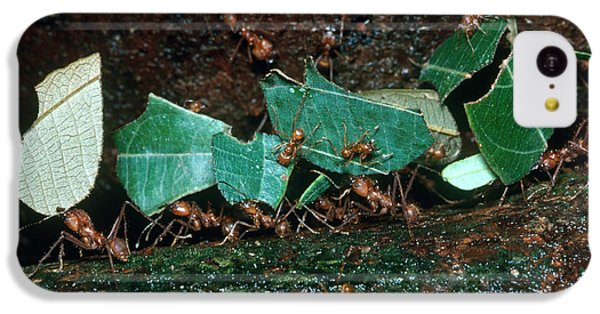 Leafcutter Ants IPhone 5c Case by Gregory G. Dimijian