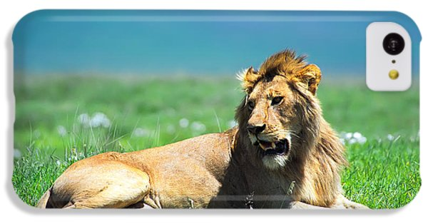 Lion King IPhone 5c Case by Sebastian Musial