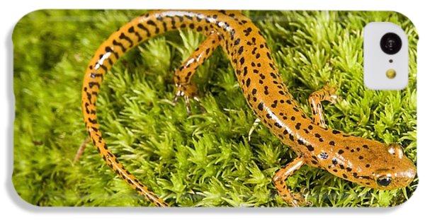 Longtail Salamander Eurycea Longicauda IPhone 5c Case by Jack Goldfarb