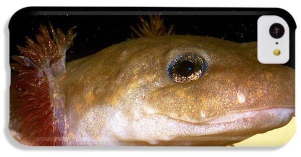 Pacific Giant Salamander Larva IPhone 5c Case by Dante Fenolio