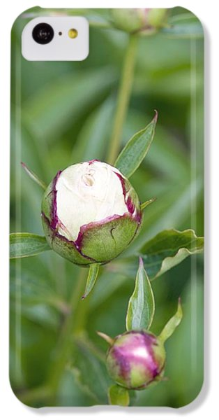 Paeonia Lactiflora 'shirley Temple' IPhone 5c Case by Jon Stokes