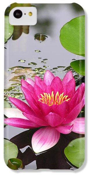 Pink Lily Flower  IPhone 5c Case by Diane Greco-Lesser