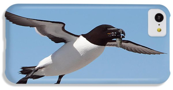 Razorbill In Flight IPhone 5c Case by Bruce J Robinson