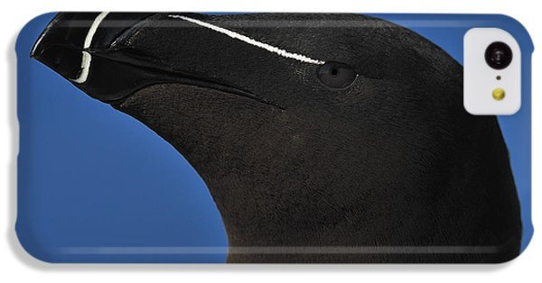 Razorbill Portrait IPhone 5c Case by Tony Beck