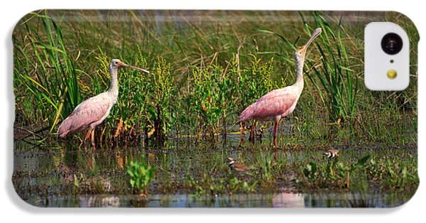 Roseate Spoonbills IPhone 5c Case by Louise Heusinkveld