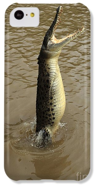 Salt Water Crocodile IPhone 5c Case by Bob Christopher