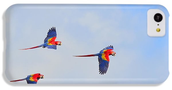 Scarlet Macaws IPhone 5c Case by Tony Beck