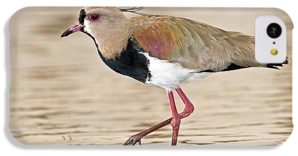 Southern Lapwing IPhone 5c Case by Tony Camacho