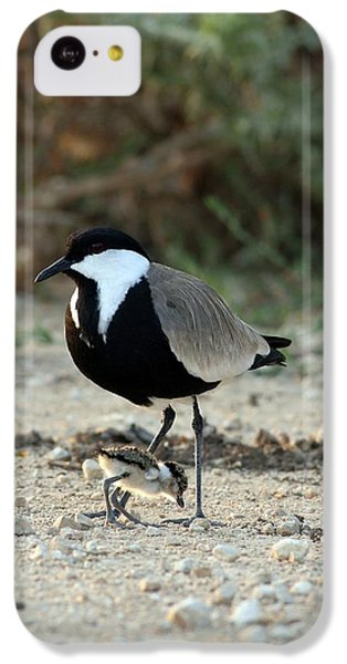Spur-winged Plover And Chick IPhone 5c Case by Photostock-israel