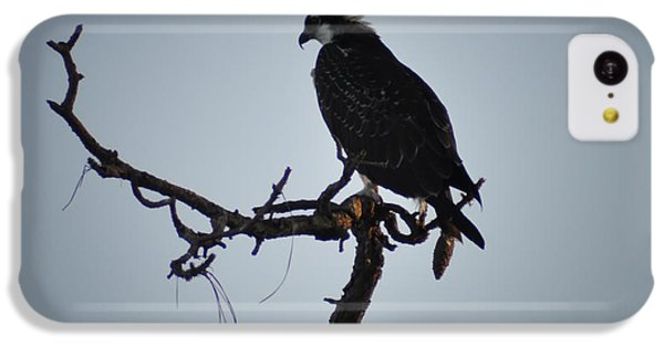 The Osprey IPhone 5c Case by Bill Cannon