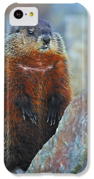 Woodchuck IPhone 5c Case by Tony Beck