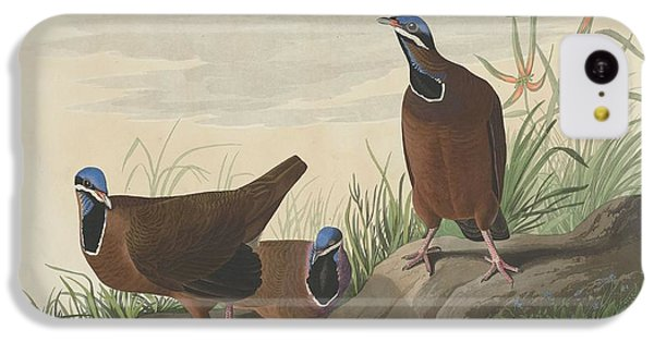 Blue-headed Pigeon IPhone 5c Case by John James Audubon