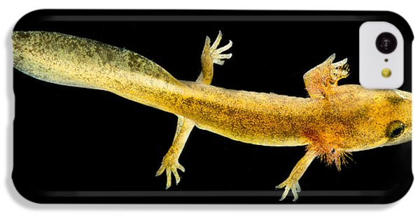 California Giant Salamander Larva IPhone 5c Case by Dant� Fenolio