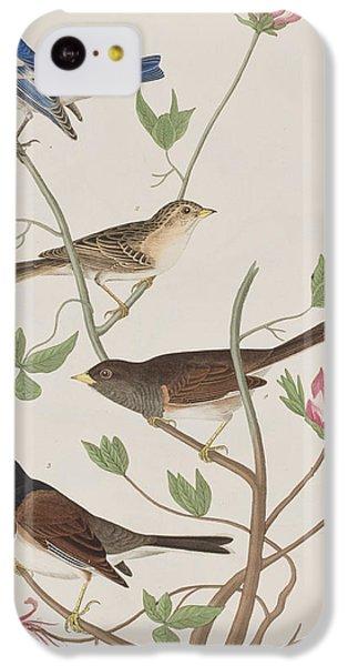 Finches IPhone 5c Case by John James Audubon