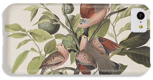 Ground Dove IPhone 5c Case by John James Audubon