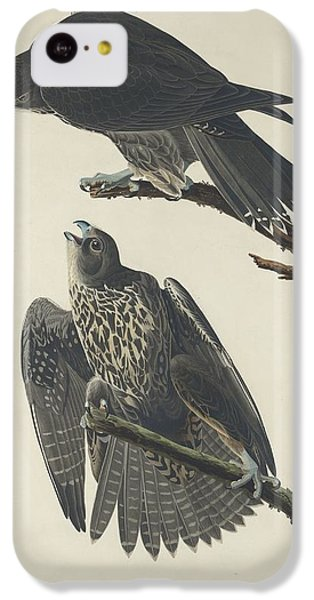 Labrador Falcon IPhone 5c Case by John James Audubon