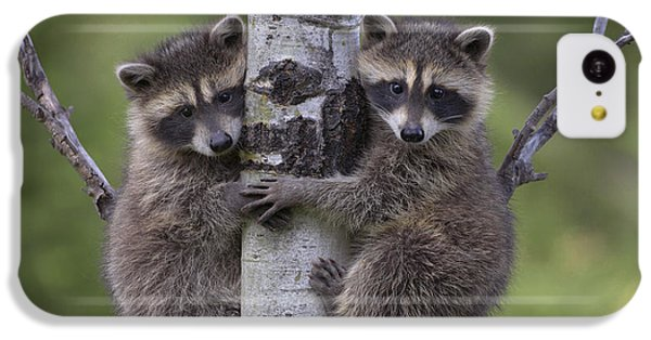 Raccoon Two Babies Climbing Tree North IPhone 5c Case by Tim Fitzharris