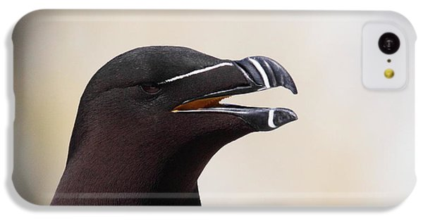 Razorbill Portrait IPhone 5c Case by Bruce J Robinson