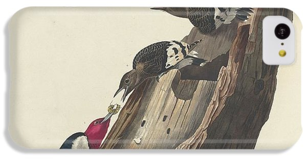 Red-headed Woodpecker IPhone 5c Case by John James Audubon
