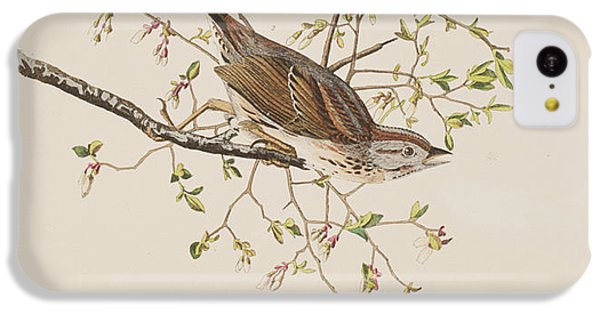 Song Sparrow IPhone 5c Case by John James Audubon