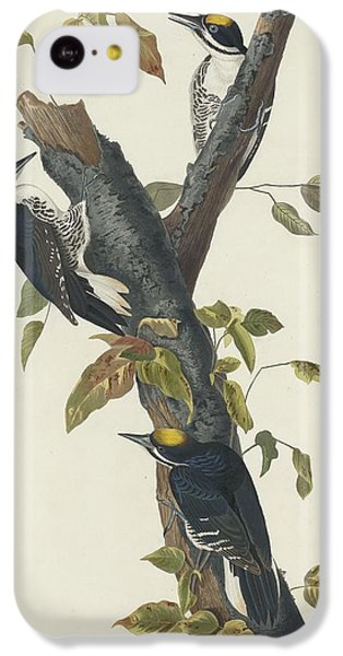 Three-toed Woodpecker IPhone 5c Case by John James Audubon