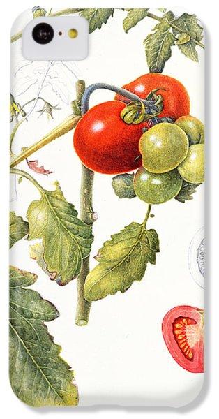 Tomatoes IPhone 5c Case by Margaret Ann Eden