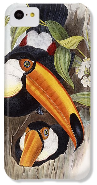 Toucan IPhone 5c Case by John Gould