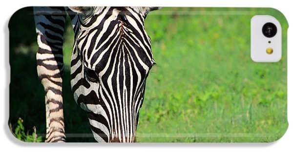 Zebra IPhone 5c Case by Sebastian Musial