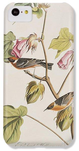 Bay Breasted Warbler IPhone 5c Case by John James Audubon