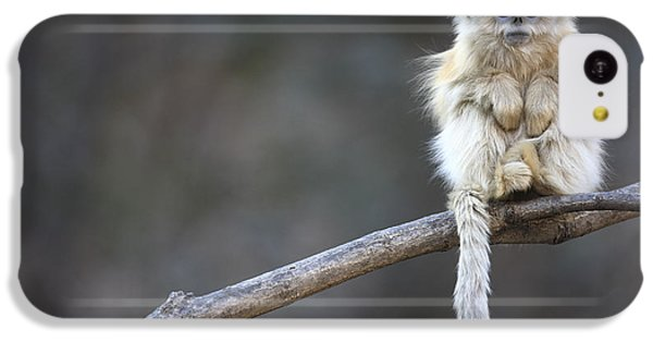 Golden Snub-nosed Monkey Rhinopithecus IPhone 5c Case by Cyril Ruoso