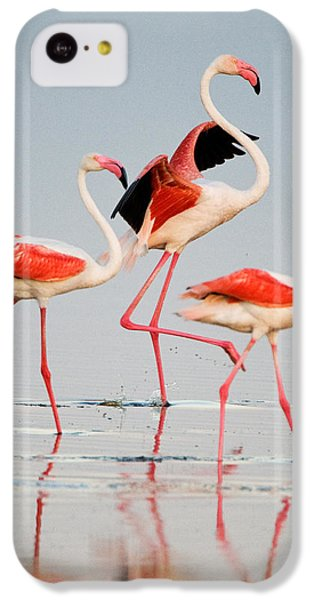 Greater Flamingos Phoenicopterus Roseus IPhone 5c Case by Panoramic Images