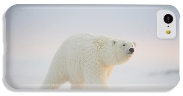 Polar Bear  Ursus Maritimus , Young IPhone 5c Case by Steven Kazlowski