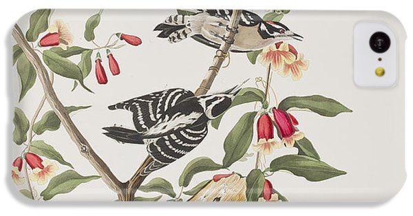 Downy Woodpecker IPhone 5c Case by John James Audubon
