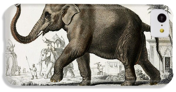 Indian Elephant, Endangered Species IPhone 5c Case by Biodiversity Heritage Library