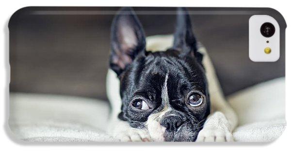 Boston Terrier Puppy IPhone 5c Case by Nailia Schwarz