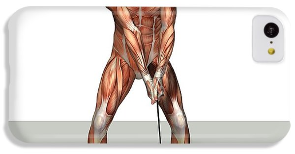 Male Muscles, Artwork IPhone 5c Case by Friedrich Saurer