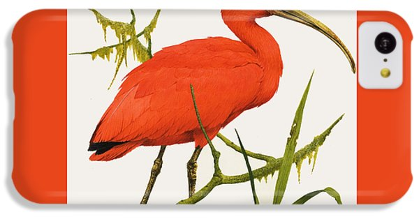 A Scarlet Ibis From South America IPhone 5c Case by Kenneth Lilly
