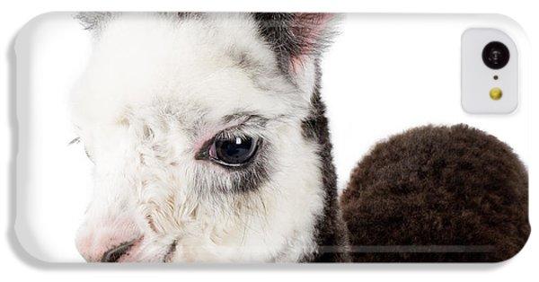 Adorable Baby Alpaca Cuteness IPhone 5c Case by TC Morgan