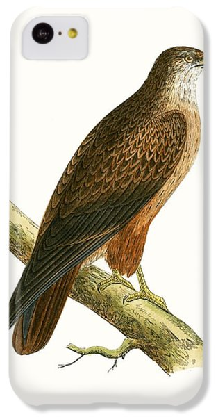 African Buzzard IPhone 5c Case by English School