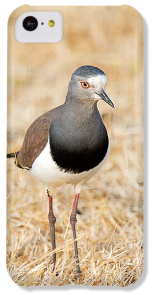 African Wattled Lapwing Vanellus IPhone 5c Case by Panoramic Images