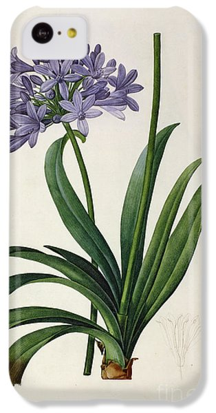 Agapanthus Umbrellatus IPhone 5c Case by Pierre Redoute