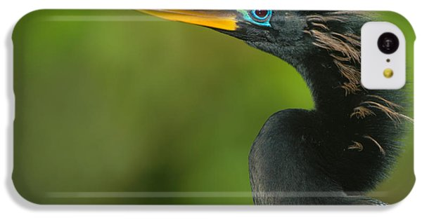 Anhinga Anhinga Anhinga, Tortuguero IPhone 5c Case by Panoramic Images