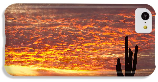 Arizona November Sunrise With Saguaro   IPhone 5c Case by James BO  Insogna
